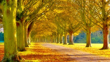 Sunny autumn afternoon HD wallpaper