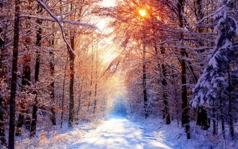 Winter photography HD wallpaper 1