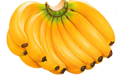 Banana Bunch HD wallpaper