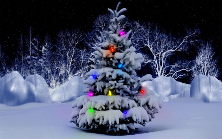 Christmas Tree Snow HD wallpaper