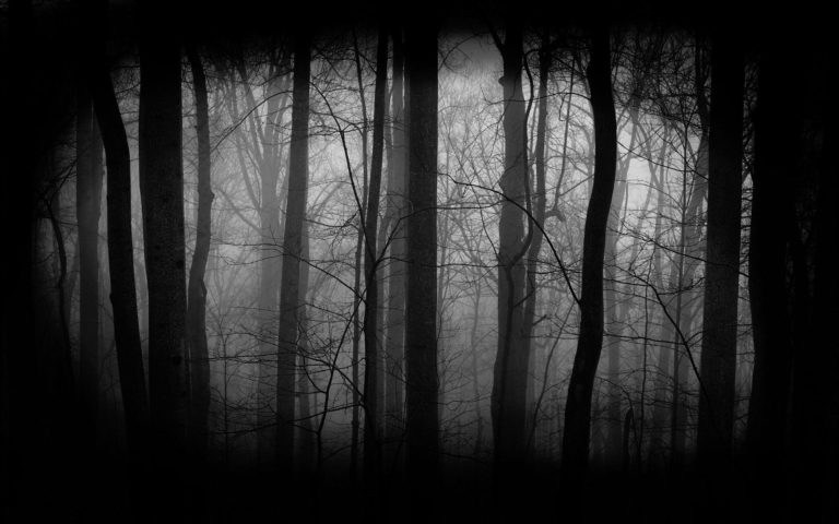 Dark Forest HD wallpaper