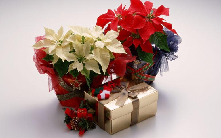 Gifts with Roses HD wallpaper