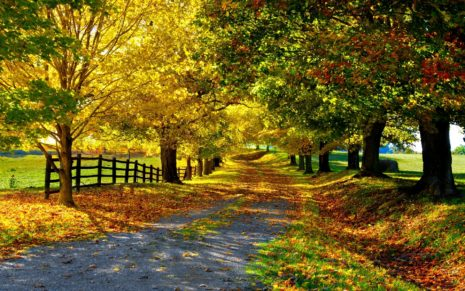 Autumn avenue HD wallpaper