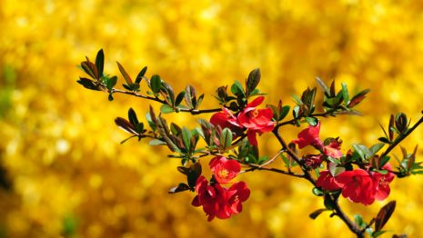 Awesome Yellow Gardens HD wallpaper