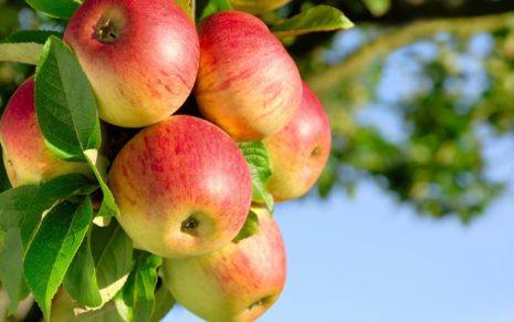 Beauty of Apple tree HD wallpaper