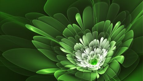 Green Flowers HD wallpaper