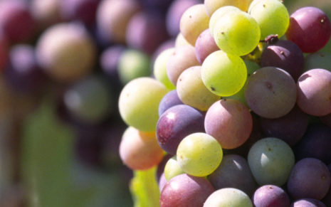 Green & Purple grapes HD wallpaper