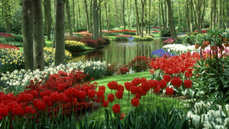 Rich flower garden HD wallpaper