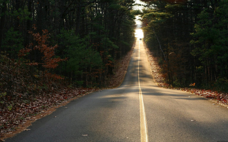 Road through the woods HD wallpaper