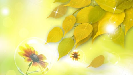 Sunshine on flowers HD wallpaper
