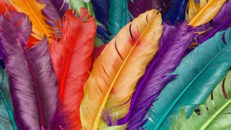 The Colorful Feathers HD wallpaper