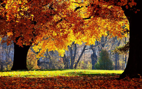 Autumn tree leaves HD wallpaper