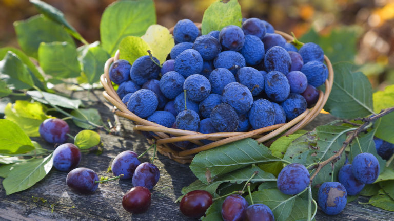 Blueberry in bowl HD wallpaper