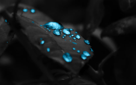 Photography of water drops HD wallpaper