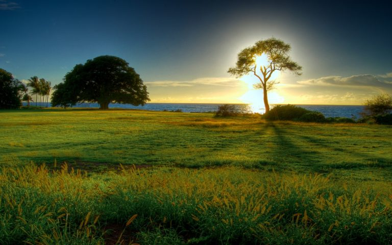 Sunset behind the tree HD wallpaper