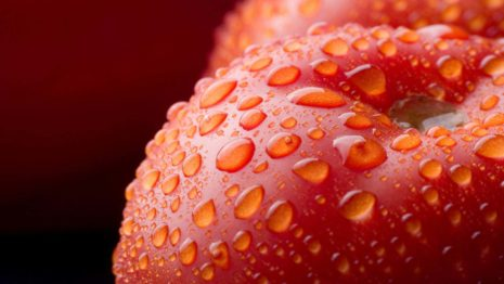 Tomato with water drops HD wallpaper
