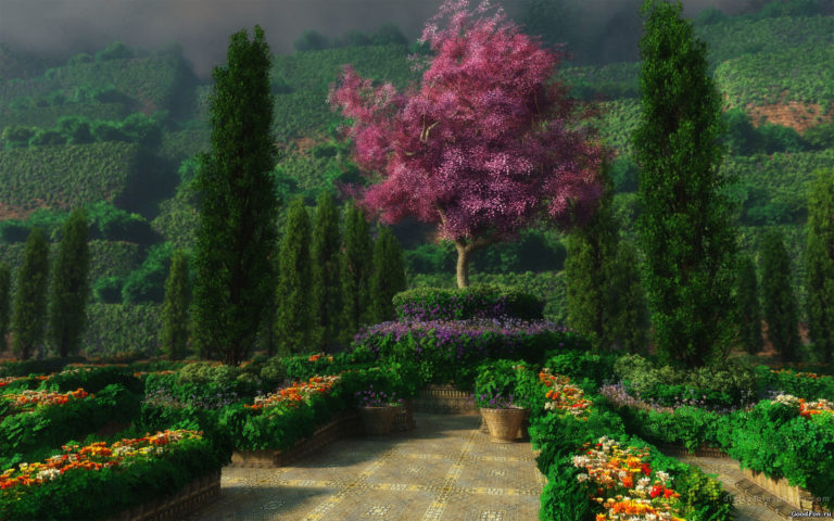 Attractive purple gardens HD wallpaper
