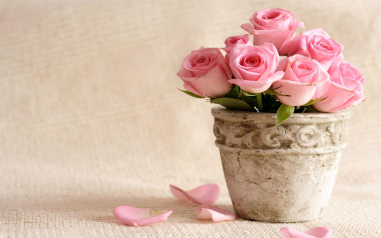 Flower pot in front of wall HD wallpaper
