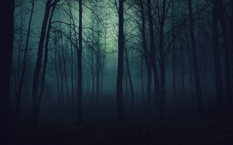 Gloomy Forest HD wallpaper