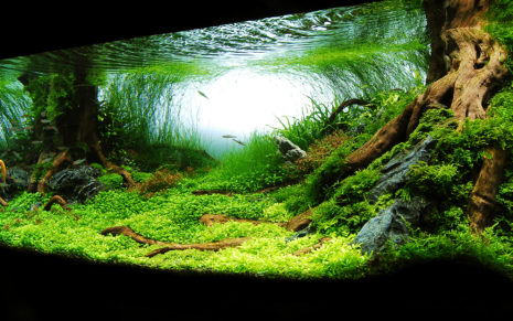 Photography of Aquarium HD wallpaper