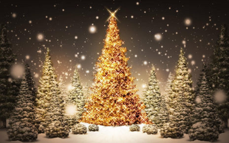 Snow & Christmas tree HD wallpaper