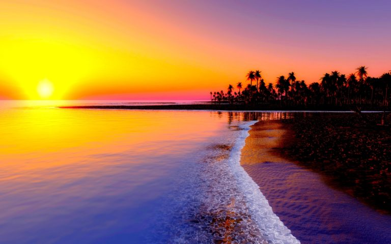 Sunset over beach of palm trees HD wallpaper