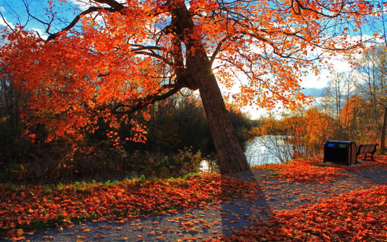 Autumn park & river HD wallpaper