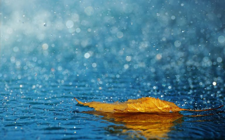 Autumn rain drops HD wallpaper