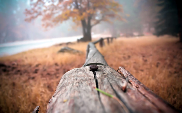 Close up fence HD wallpaper