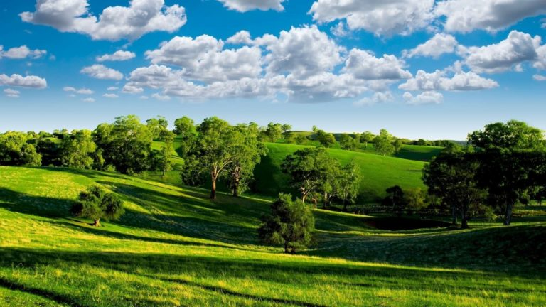 Green meadows HD wallpaper