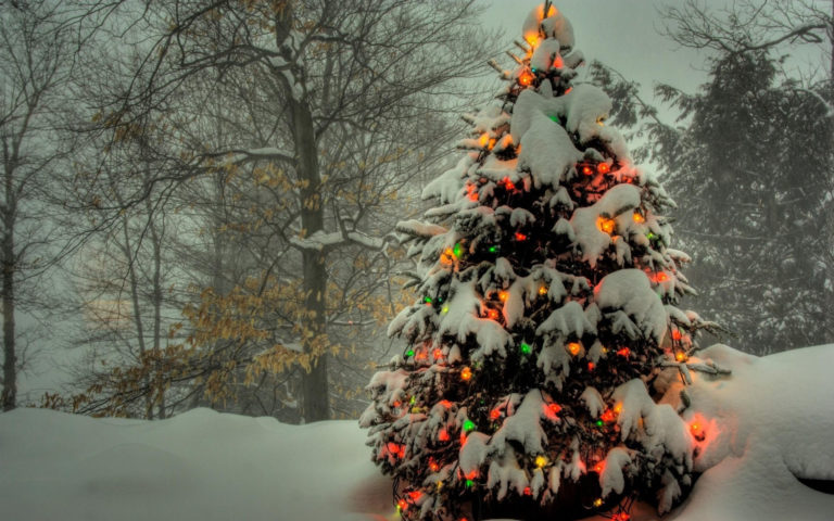 Snowy tree HD wallpaper