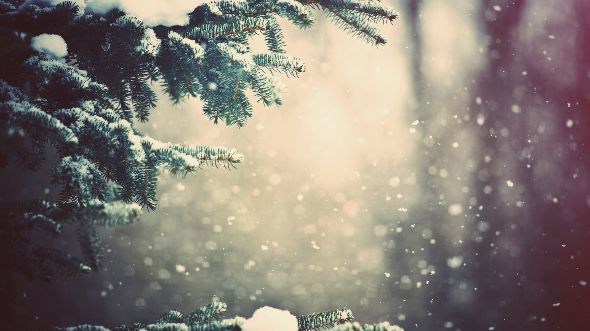Winter Spruce HD Wallpaper