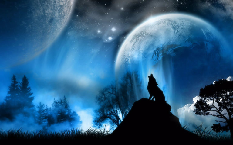 Wolf in moonlight HD wallpaper
