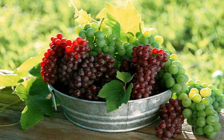 Grapes varieties HD wallpaper