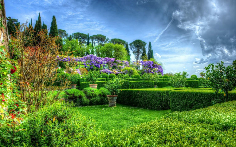 The green shrubs HD wallpaper
