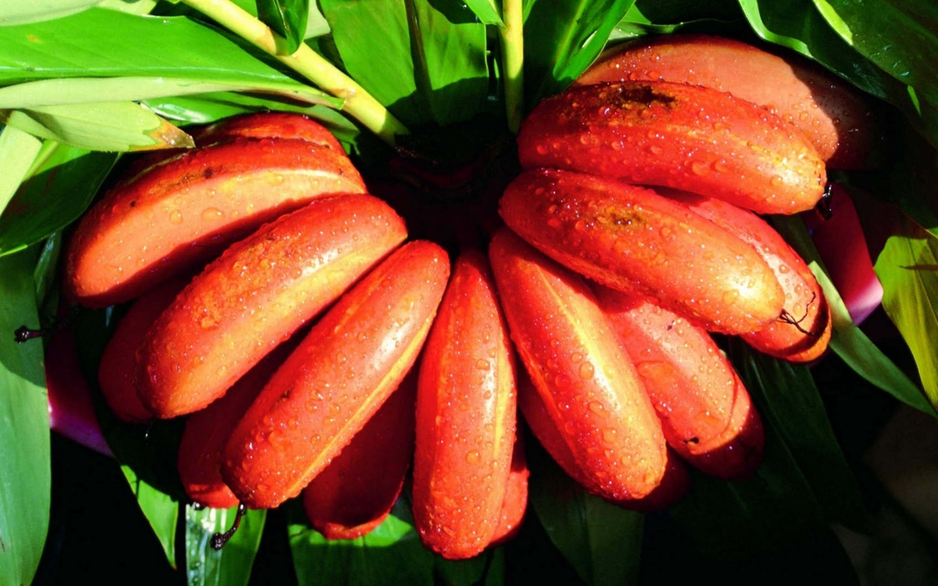 red banana hd wallpaper | hd latest wallpapers