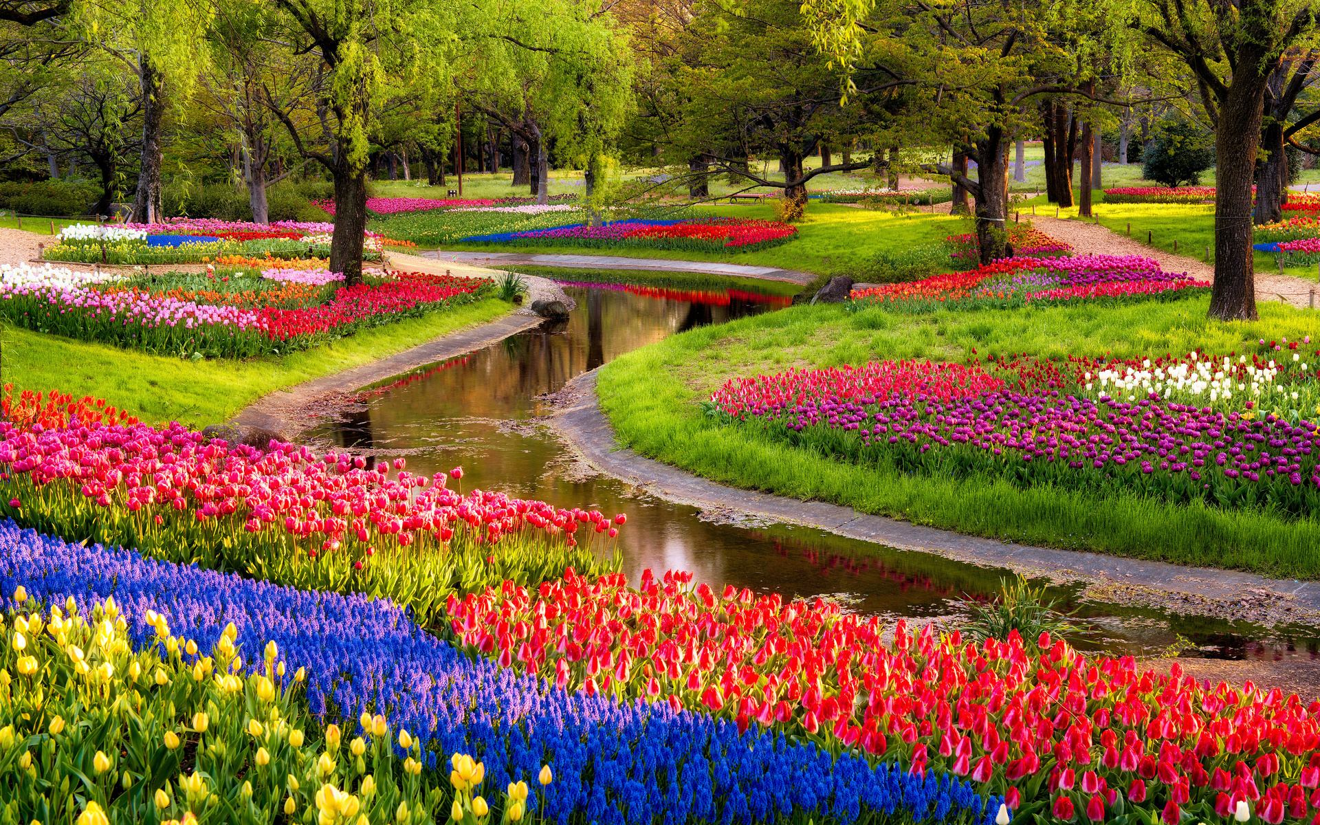Beautiful Flowers Garden HD Wallpaper | HD Latest Wallpapers